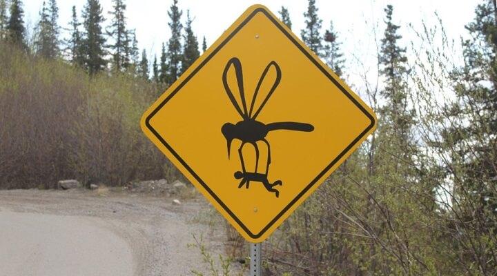Полисы ОСАГО скоро подорожают, хотя по-прежнему не будут возмещать ущерб от атак гигантских комаров
